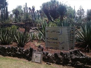 Resguarda la vida jard n bot nico universitario el punto Jardin botanico de la unam